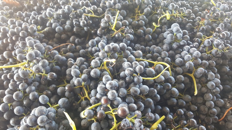 Beautiful Ripe Fruit – Low Baume's