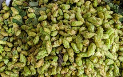 Brewing with 2020 Fresh Hops